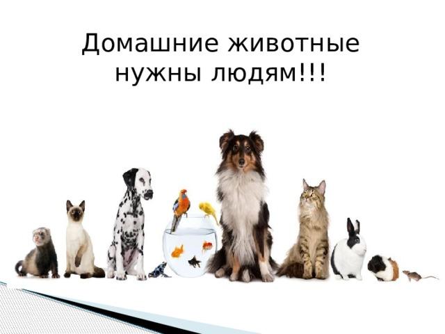 Домашние животные нужны людям!!!