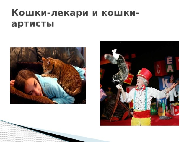 Кошки-лекари и кошки-артисты