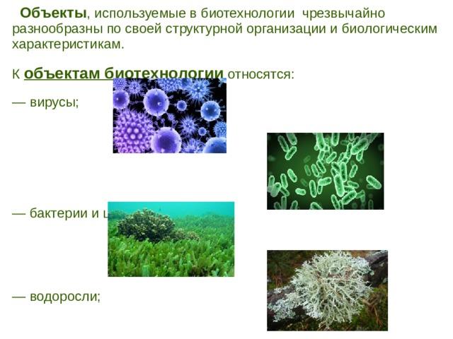 Объекты , используемые в биотехнологии чрезвычайно разнообразны по своей структурной организации и биологическим характеристикам. К объектам биотехнологии относятся: — вирусы; — бактерии и цианобактерии; — водоросли; — лишайники; .