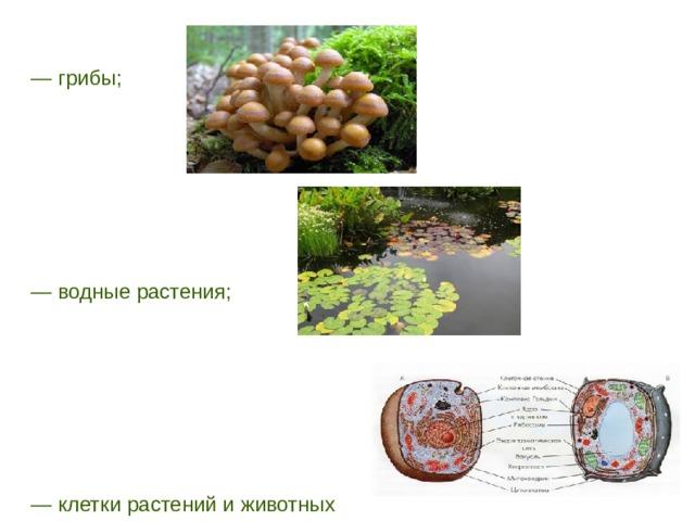 — грибы; — водные растения; — клетки растений и животных