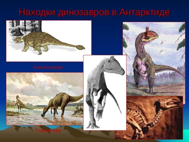 Находки динозавров в Антарктиде Анкилозавр Гадрозавр