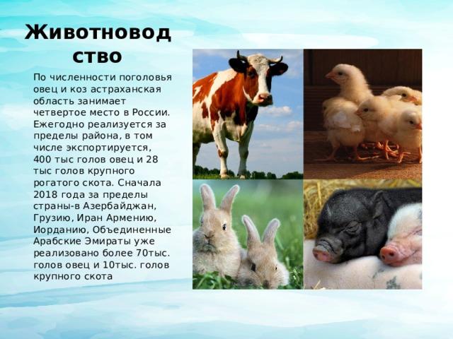 Животноводство По численности поголовья овец и коз астраханская область занимает четвертое место в России. Ежегодно реализуется за пределы района, в том числе экспортируется, 400 тыс голов овец и 28 тыс голов крупного рогатого скота. Сначала 2018 года за пределы страны-в Азербайджан, Грузию, Иран Армению, Иорданию, Объединенные Арабские Эмираты уже реализовано более 70тыс. голов овец и 10тыс. голов крупного скота