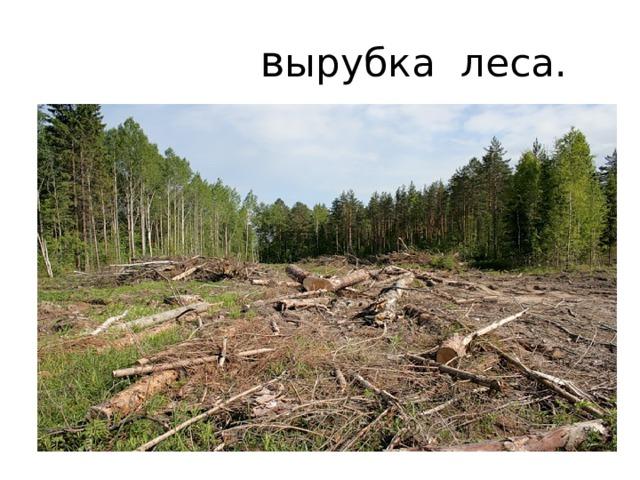 в ырубка леса.