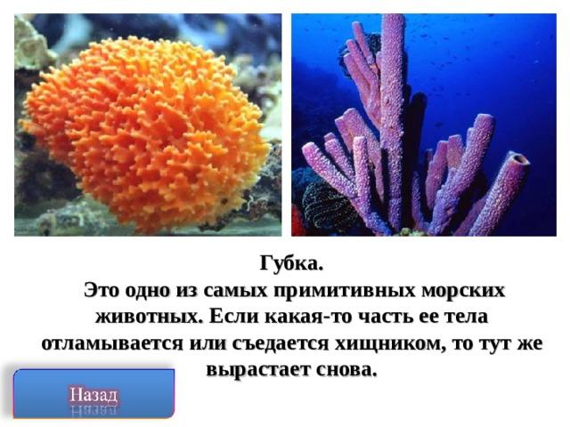 Губка.  Это одно из самых примитивных морских животных. Если какая-то часть ее тела отламывается или съедается хищником, то тут же вырастает снова.