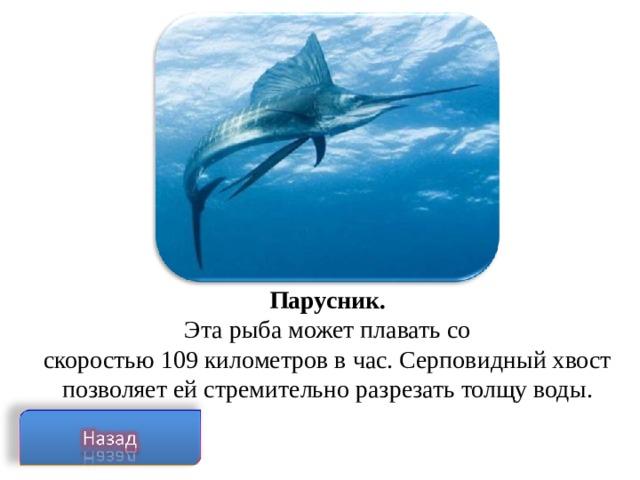 Парусник. Эта рыба может плавать со  скоростью 109 километров в час. Серповидный хвост позволяет ей стремительно разрезать толщу воды.