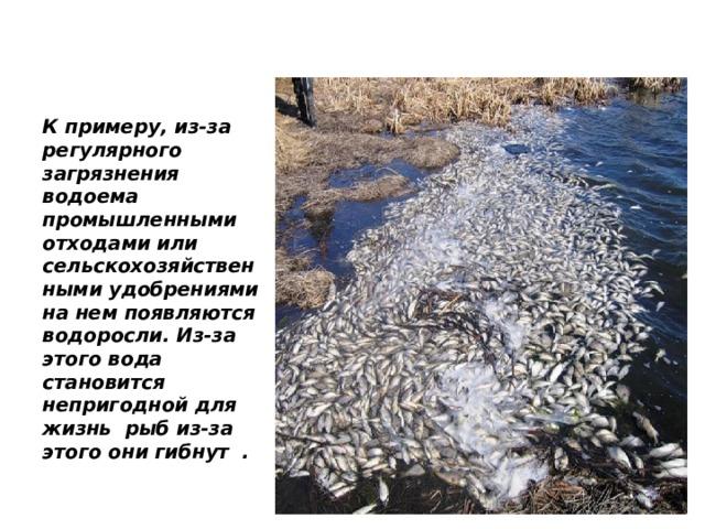 К примеру, из-за регулярного загрязнения водоема промышленными отходами или сельскохозяйственными удобрениями на нем появляются водоросли. Из-за этого вода становится непригодной для жизнь рыб из-за этого они гибнут .