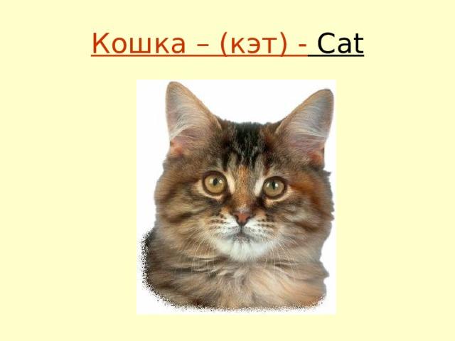 Кошка – (кэт) - Сat