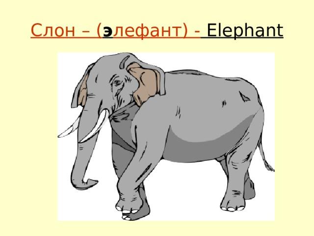 Слон – ( э лефант) - Elephant
