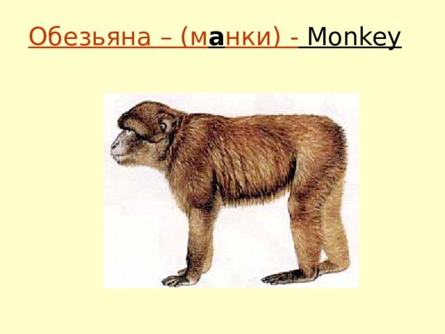 Обезьяна – (м а нки) - Monkey