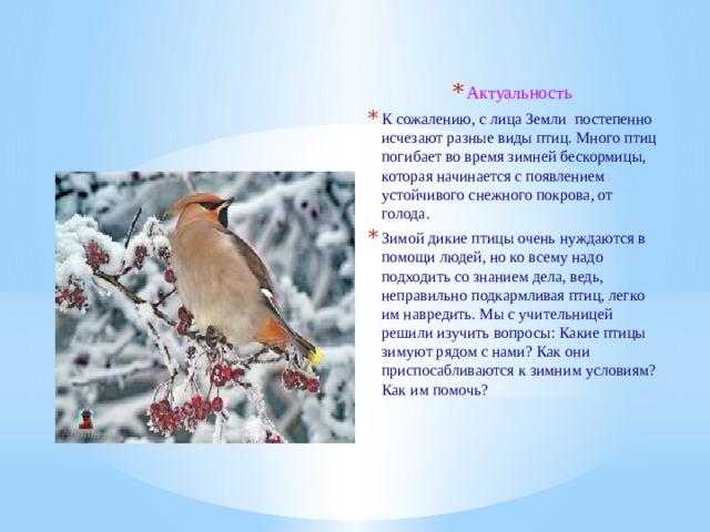 Актуальность К сожалению, с лица Земли постепенно исчезают разные виды птиц. Много птиц погибает во время зимней бескормицы, которая начинается с появлением устойчивого снежного покрова, от голода. Зимой дикие птицы очень нуждаются в помощи людей, но ко всему надо подходить со знанием дела, ведь, неправильно подкармливая птиц, легко им навредить. Мы с учительницей решили изучить вопросы: Какие птицы зимуют рядом с нами? Как они приспосабливаются к зимним условиям? Как им помочь?