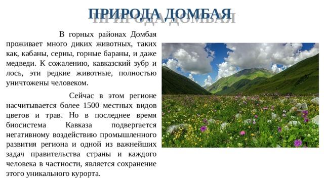 ПРИРОДА ДОМБАЯ  В горных районах Домбая проживает много диких животных, таких как, кабаны, серны, горные бараны, и даже медведи. К сожалению, кавказский зубр и лось, эти редкие животные, полностью уничтожены человеком.  Сейчас в этом регионе насчитывается более 1500 местных видов цветов и трав. Но в последнее время биосистема Кавказа подвергается негативному воздействию промышленного развития региона и одной из важнейших задач правительства страны и каждого человека в частности, является сохранение этого уникального курорта.