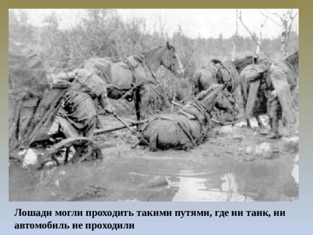 Лошади могли проходить такими путями, где ни танк, ни автомобиль не проходили