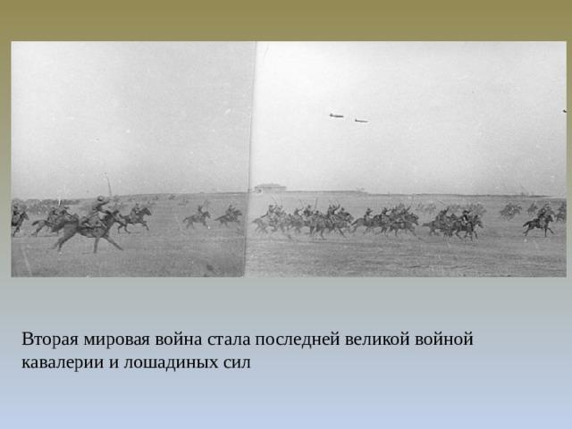 Вторая мировая война стала последней великой войной кавалерии и лошадиных сил