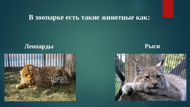 В зоопарке есть такие животные как: Рыси Леопарды