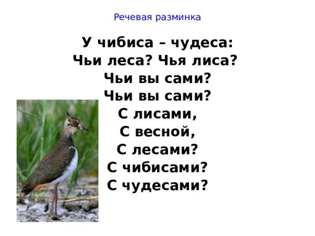 Речевая разминка У чибиса – чудеса: Чьи леса? Чья лиса? Чьи вы сами? Чьи вы сами? С лисами, С весной, С лесами? С чибисами? С чудесами?