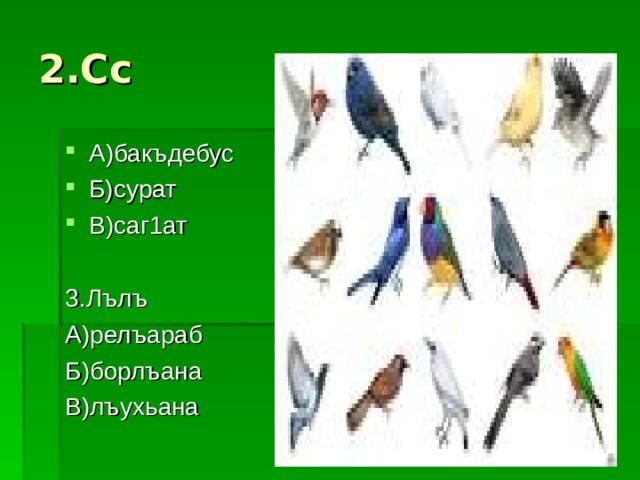 2.Сс А)бакъдебус Б)сурат В)саг1ат  3.Лълъ А)релъараб Б)борлъана В)лъухьана