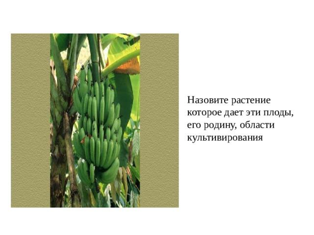 Назовите растение которое дает эти плоды, его родину, области культивирования