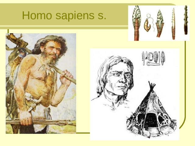 H omo  sapiens  s.