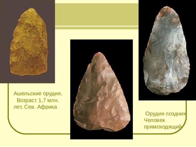 Ашельские орудия. Возраст 1,7 млн. лет. Сев. Африка  Орудия поздних Человек прямоходящий