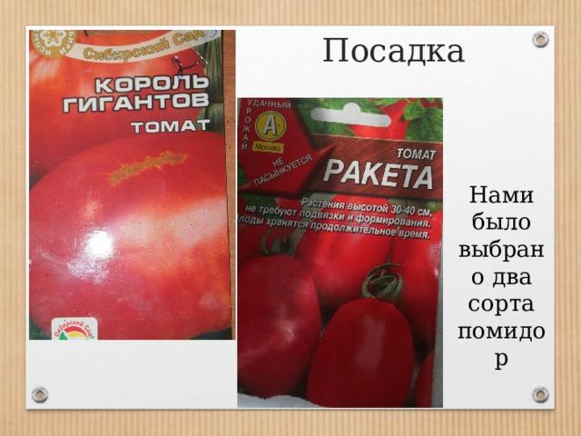 Посадка Нами было выбрано два сорта помидор