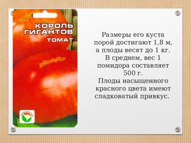 Размеры его куста порой достигают 1,8 м, а плоды весят до 1 кг. В среднем, вес 1 помидора составляет 500 г.  Плоды насыщенного красного цвета имеют сладковатый привкус.