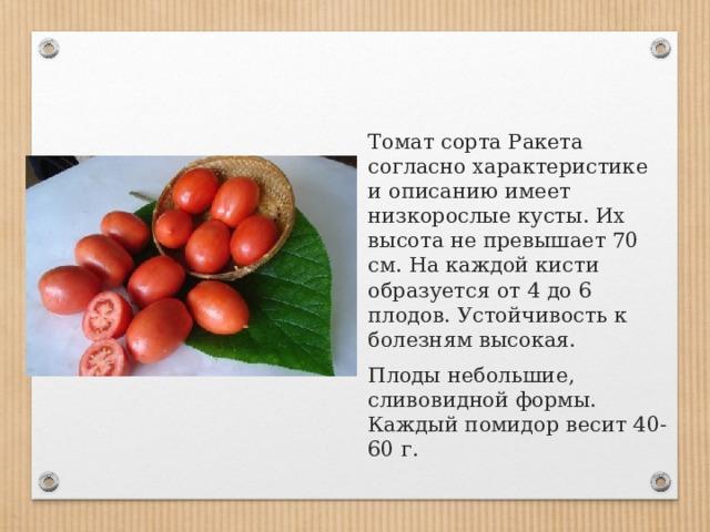 Томат сорта Ракета согласно характеристике и описанию имеет низкорослые кусты. Их высота не превышает 70 см. На каждой кисти образуется от 4 до 6 плодов. Устойчивость к болезням высокая. Плоды небольшие, сливовидной формы. Каждый помидор весит 40-60 г.