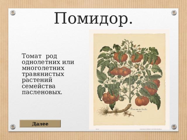 Помидор. Томат род однолетних или многолетних травянистых растений семейства пасленовых. Далее
