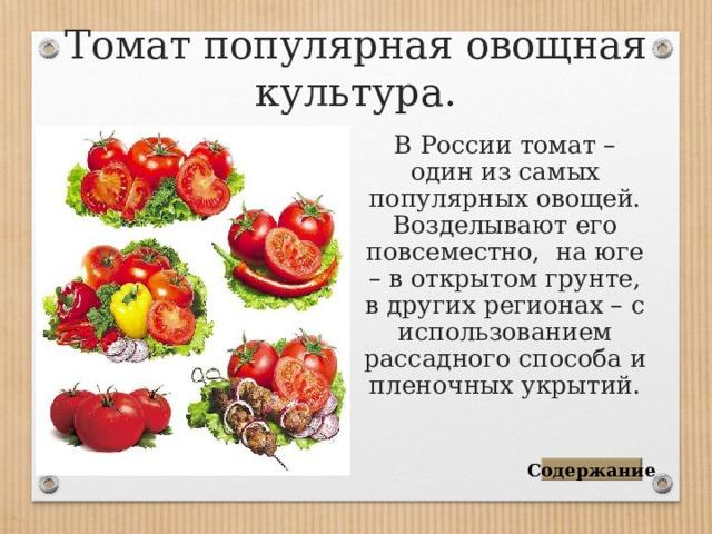 Томат популярная овощная культура. В России томат – один из самых популярных овощей. Возделывают его повсеместно, на юге – в открытом грунте, в других регионах – с использованием рассадного способа и пленочных укрытий. Содержание