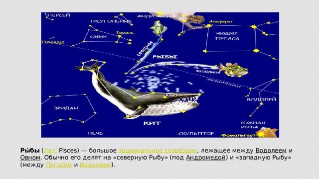 Ры́бы ( лат. Pisces)— большое зодиакальное созвездие , лежащее между Водолеем и Овном . Обычно его делят на «северную Рыбу» (под Андромедой ) и «западную Рыбу» (между Пегасом и Водолеем ).