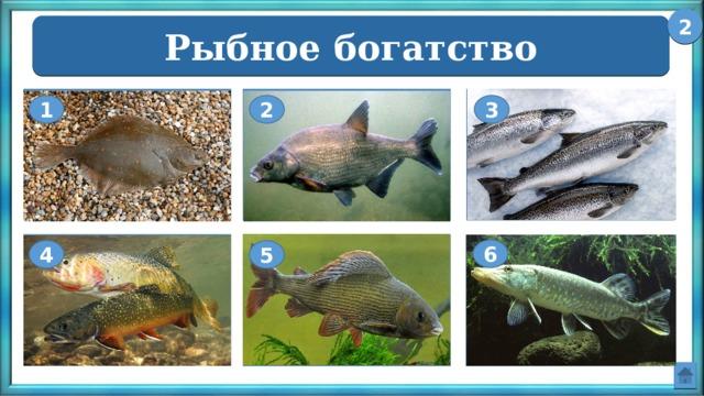 2 Рыбное богатство Камбала Лещ Сёмга 1 2 3 Форель Щука Хариус 6 4 5