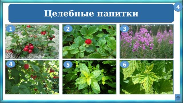 4 Целебные напитки Иван – чай Земляника Брусника 2 3 1 Малина Чёрная смородина Мята 4 6 5