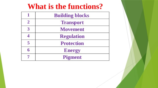 What is the functions? 1 Building blocks 2 Transport 3 Movement 4 Regulation 5 Protection 6 Energy 7 Pigment