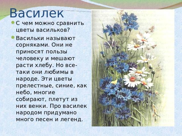 С чем можно сравнить цветы васильков? Васильки называют сорняками. Они не приносят пользы человеку и мешают расти хлебу. Но все-таки они любимы в народе. Эти цветы прелестные, синие, как небо, многие собирают, плетут из них венки. Про василек народом придумано много песен и легенд.