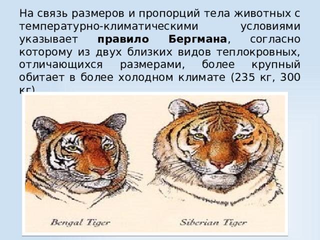 На связь размеров и пропорций тела животных с температурно-климатическими условиями указывает правило Бергмана , согласно которому из двух близких видов теплокровных, отличающихся размерами, более крупный обитает в более холодном климате (235 кг, 300 кг)
