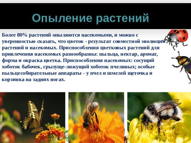 Опыление растений Более 80% растений опыляются насекомыми, и можно с уверенностью сказать, что цветок - результат совместной эволюции растений и насекомых. Приспособления цветковых растений для привлечения насекомых разнообразны: пыльца, нектар, аромат, форма и окраска цветка. Приспособления насекомых: сосущий хоботок бабочек, грызуще-лижущий хоботок пчелиных; особые пыльцесобирательные аппараты - у пчел и шмелей щеточка и корзинка на задних ногах.