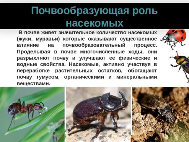 Почвообразующая роль насекомых  В почве живет значительное количество насекомых (жуки, муравьи) которые оказывают существенное влияние на почвообразовательный процесс. Проделывая в почве многочисленные ходы, они разрыхляют почву и улучшают ее физические и водные свойства. Насекомые, активно участвуя в переработке растительных остатков, обогащают почву гумусом, органическими и минеральными веществами. www.PresentationPro.com