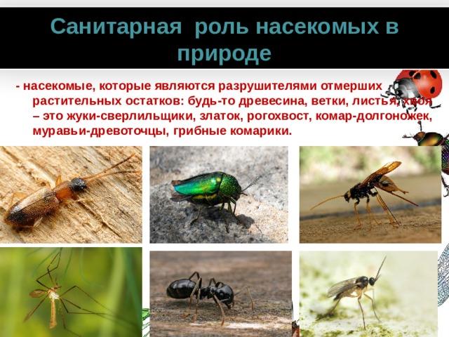 Санитарная роль насекомых в природе - насекомые, которые являются разрушителями отмерших растительных остатков: будь-то древесина, ветки, листья, хвоя – это жуки-сверлильщики, златок, рогохвост, комар-долгоножек, муравьи-древоточцы, грибные комарики.  www.PresentationPro.com