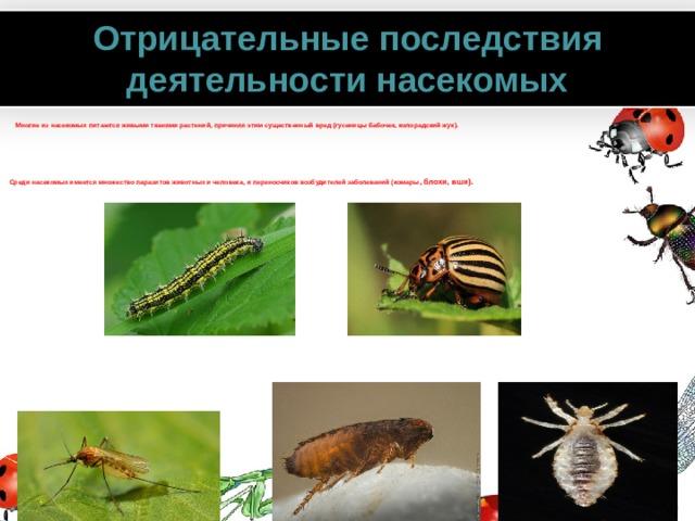 Отрицательные последствия деятельности насекомых  Многие из насекомых питаются живыми тканями растений, причиняя этим существенный вред (гусеницы бабочек, колорадский жук).      Среди насекомых имеется множество паразитов животных и человека, и переносчиков возбудителей заболеваний (комары , блохи, вши). www.PresentationPro.com