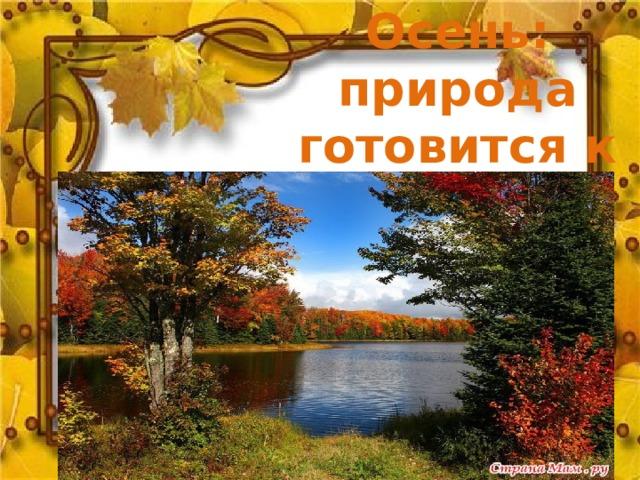 Осень: природа готовится к зиме