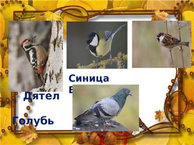 Синица Воробей  Дятел  Голубь