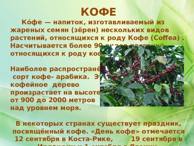КОФЕ  Ко́фе— напиток, изготавливаемый из жареных семян (зёрен) нескольких видов растений, относящихся к роду Кофе (Coffea) . Насчитывается более 90 видов растений, относящихся к роду кофе.  Наиболее распространённый  сорт кофе- арабика. Это кофейное дерево произрастает на высоте от 900 до 2000 метров над уровнем моря.  В некоторых странах существует праздник, посвящённый кофе. «День кофе» отмечается 12 сентября в Коста-Рике, 19 сентября в Ирландии и 1 октября в Японии.