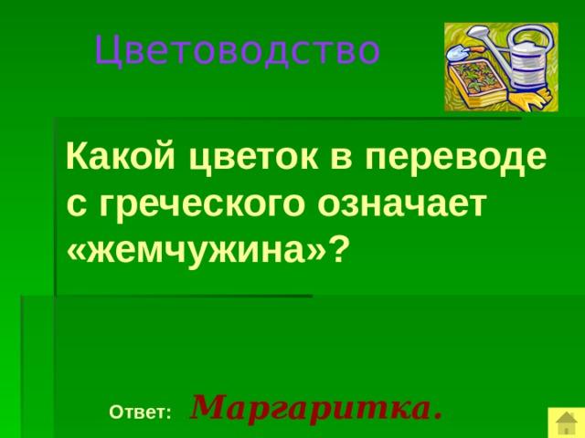 Цветоводство  Какой цветок в переводе с греческого означает «жемчужина»?  Ответ:  Маргаритка.