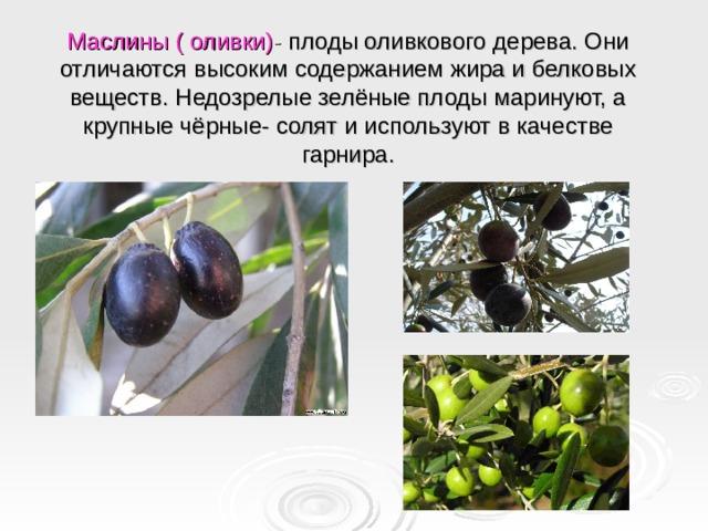 Маслины ( оливки) - плоды оливкового дерева. Они отличаются высоким содержанием жира и белковых веществ. Недозрелые зелёные плоды маринуют, а крупные чёрные- солят и используют в качестве гарнира.