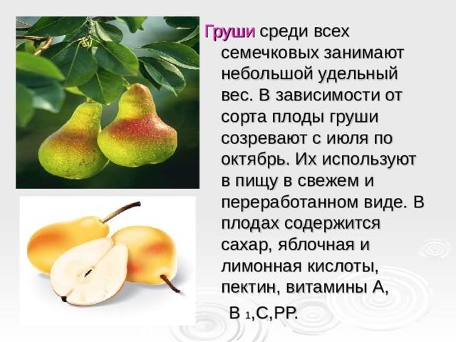 Груши среди всех семечковых занимают небольшой удельный вес. В зависимости от сорта плоды груши созревают с июля по октябрь. Их используют в пищу в свежем и переработанном виде. В плодах содержится сахар, яблочная и лимонная кислоты, пектин, витамины А,  В 1 ,С,РР.