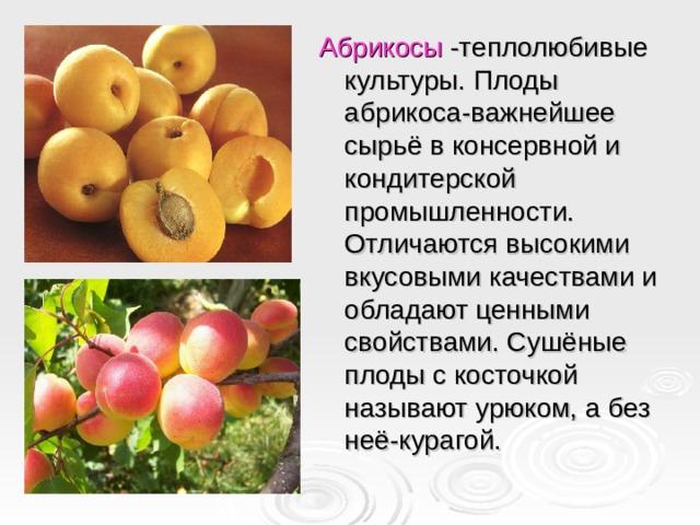 Абрикосы -теплолюбивые культуры. Плоды абрикоса-важнейшее сырьё в консервной и кондитерской промышленности. Отличаются высокими вкусовыми качествами и обладают ценными свойствами. Сушёные плоды с косточкой называют урюком, а без неё-курагой.