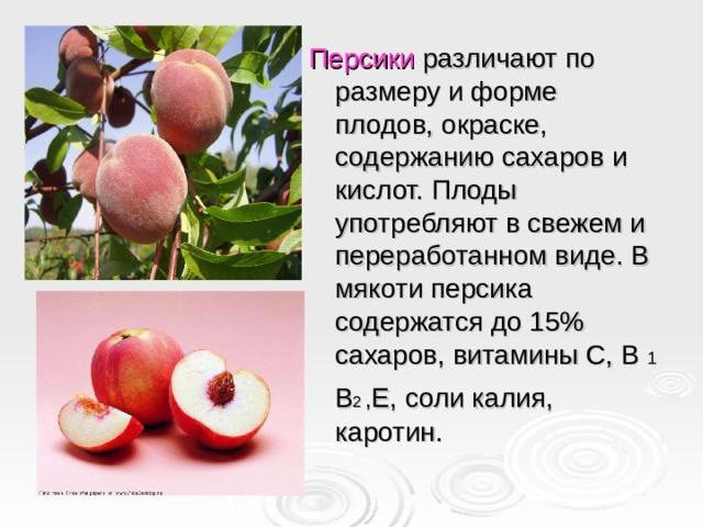 Персики различают по размеру и форме плодов, окраске, содержанию сахаров и кислот. Плоды употребляют в свежем и переработанном виде. В мякоти персика содержатся до 15% сахаров, витамины С, В 1  В 2  , Е, соли калия, каротин.