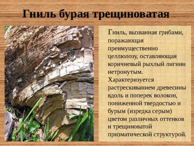 Гниль бурая трещиноватая  Г ниль, вызванная грибами, поражающая преимущественно целлюлозу, оставляющая коричневый рыхлый лигнин нетронутым. Характеризуется растрескиванием древесины вдоль и поперек волокон, пониженной твердостью и бурым (изредка серым) цветом различных оттенков и трещиноватой призматической структурой.