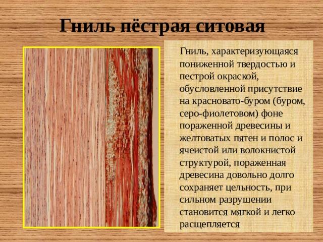 Гниль пёстрая ситовая  Гниль, характеризующаяся пониженной твердостью и пестрой окраской, обусловленной присутствие на красновато-буром (буром, серо-фиолетовом) фоне пораженной древесины и желтоватых пятен и полос и ячеистой или волокнистой структурой, пораженная древесина довольно долго сохраняет цельность, при сильном разрушении становится мягкой и легко расщепляется