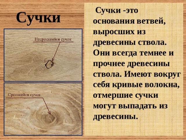 Сучки -это основания ветвей, выросших из древесины ствола. Они всегда темнее и прочнее древесины ствола. Имеют вокруг себя кривые волокна, отмершие сучки могут выпадать из древесины. Сучки