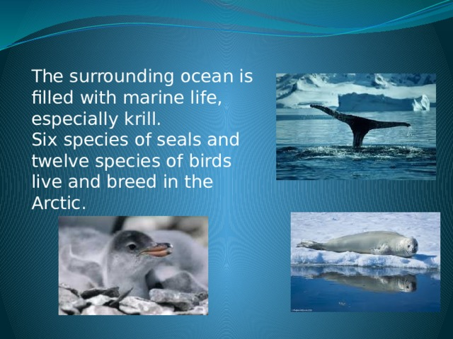 The surrounding ocean is filled with marine life, especially krill. Six species of seals and twelve species of birds live and breed in the Arctic.